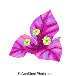 Illustration of tropical bougainvillea flower. Decorative exotic plant.