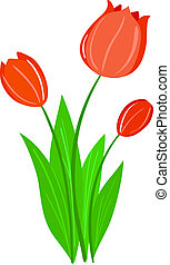 Illustration of Tulip