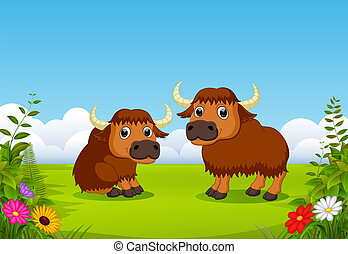 two big brown bison playing in the green field around the flowers