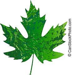illustration of vector maple leaf in grunge style