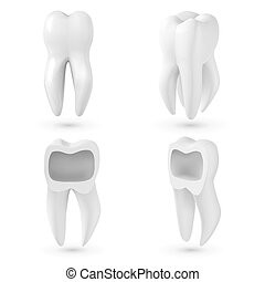 Vector Realistic 3D Tooth Set. Healthy Teeth Set Care Vector Product Template Isolated on White Background