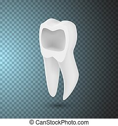 Vector Tooth Icon. Realistic Teeth Isolated on Transparent Overlay Background