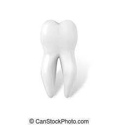 Vector Tooth Icon. Realistic Teeth Isolated on White Background