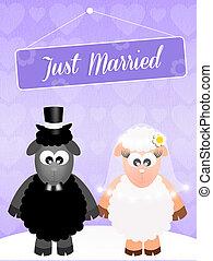 illustration of Wedding of sheeps