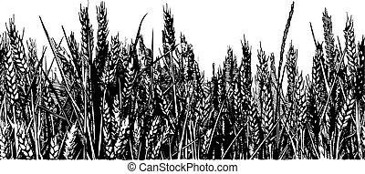 illustration of wheat field