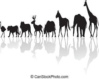 illustration of wild animal silhouette