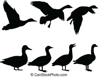 wild duck - vector - illustration of wild duck - vector
