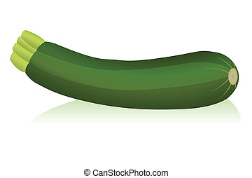 zucchini - Illustration of zucchini