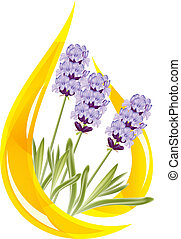 illustration., oil., gota, lavanda, vector, esencial