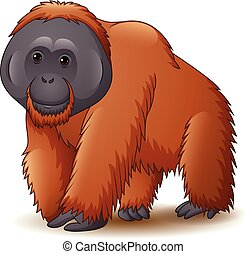 illustration, orang-outan, blanc, isolé, fond