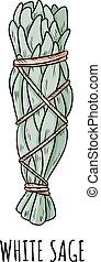 illustration., paquet, aromate, crosse, griffonnage, sauge, hand-drawn, isolé, blanc, tache
