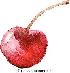 illustration., pintado, cereza, mano, acuarela, vector,...