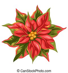 illustration, poinsettia, flower.
