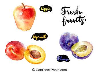 illustration., pomme, isolé, abricot, aquarelle, arrière-plan., fruits, frais, blanc, prune
