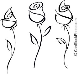 illustration., roos, vrijstaand, achtergrond., vector, bloesems, witte