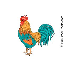 Rooster Isolated on White Background