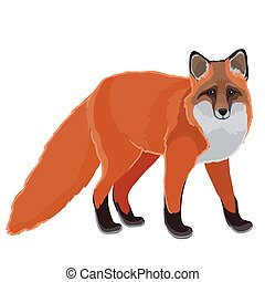 illustration, rouges, naturel, fond, renard, style, blanc, ...