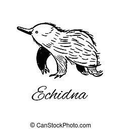 illustration., scarabocchiare, business., echidna, logotype, vettore, style., icona