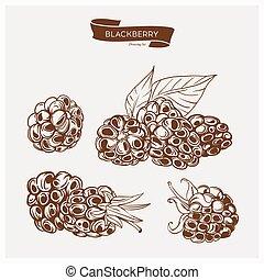 Illustration set of drawing blackberry. Hand draw illustration set for design.