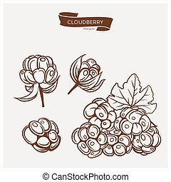 Illustration set of drawing Cloudberry. Hand draw illustration set for design. Vector engraving drawing antique illustration of Cloudberry with leafs.