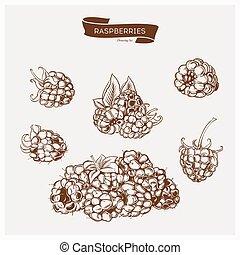 Illustration set of drawing raspberry. Hand draw illustration set for design.