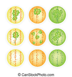Illustration Set of Four Leaf Clovers Banner