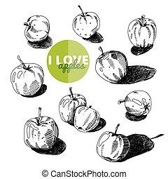 illustration., set., vintage., ręka, wektor, jabłka, pociągnięty