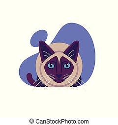 illustration., siamois, isolé, chat, arrière-plan., vecteur, blanc