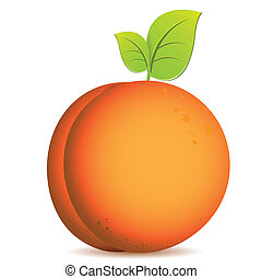 illustration, single ripe orange peach on white background
