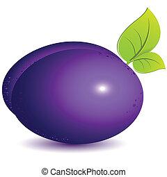 plum - illustration, single ripe violet plum on white...