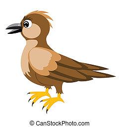 Illustration sparrow
