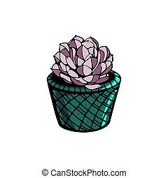 illustration, succulent, isolé, plat, arrière-plan., plants., fleurir pot, blanc, vecteur, maison