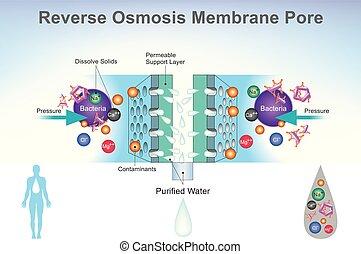 illustration., système, osmosis, diagram., renverser
