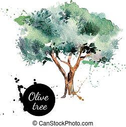 illustration., träd, hand, vattenfärg, vektor, oliv, ...