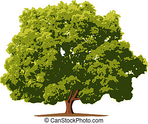 Illustration tree in vector.