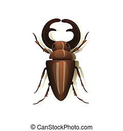 illustration., veado, experiência., vetorial, besouro, branca