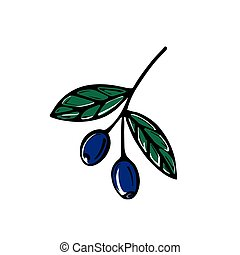 illustration, vecteur, branche, olives, arrière-plan., hand-drawn, isolé, blanc