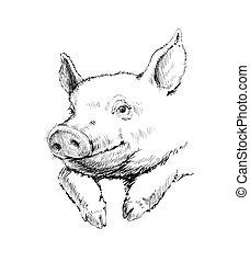 illustration, vecteur, croquis, cochon, main, dessiné