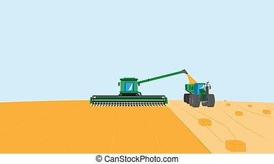 illustration, vecteur, moissonneuse, grain, combiner, récolte, plants., field., time., agriculture, récolte
