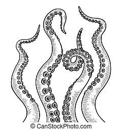 illustration., vecteur, poulpe, croquis, tentacule, image., style, noir, gravure, blanc, remettre ensemble, planche, imitation., dessiné, égratignure