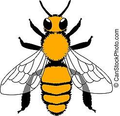 illustration., vector, bee., amarillo, negro, aislado, white.