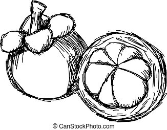 illustration vector doodle hand drawn of sketch mangosteen isolated.