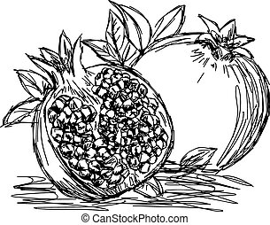 illustration vector doodle hand drawn of sketch pomegranate isolated.