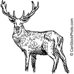 illustration vector doodle hand drawn of sketch reindeer isolated on white.