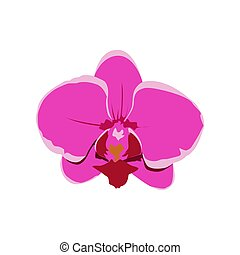 Illustration Vector graphic of Orchid flower