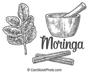 illustration., vector, pod., hojas, pestle., vendimia, moringa, mortero, grabado