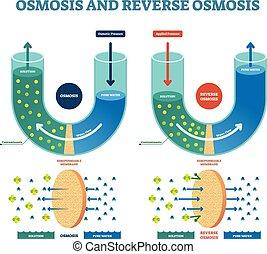 illustration., vektor, solution., osmosis, prozess, erklärt, gegenteil