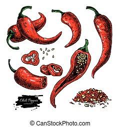 illustration., vettore, caldo, isolato, stile, disegnato, mano, piccante, pepe, artistico, peperoncino, verdura, messicano, object.
