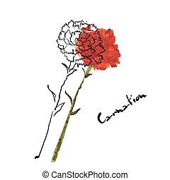 Illustration with carnation flower