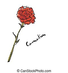 Illustration with carnation flower ?